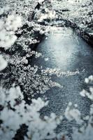 frozen leaf by jyoujo