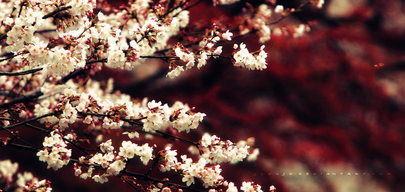 Όμορφες εικόνες... When_september_ends_by_jyoujo