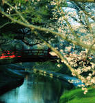 glimpse everywhere by jyoujo