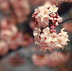 sakura fragment by jyoujo