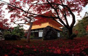 golden place of fallen leaves by jyoujo
