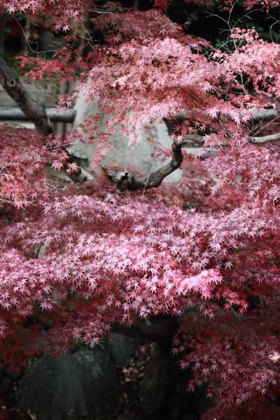 Naturalement Best - Page 4 Hoshi_no_oji_sama_by_jyoujo-d3442jy