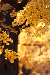 golden burn shines on by jyoujo