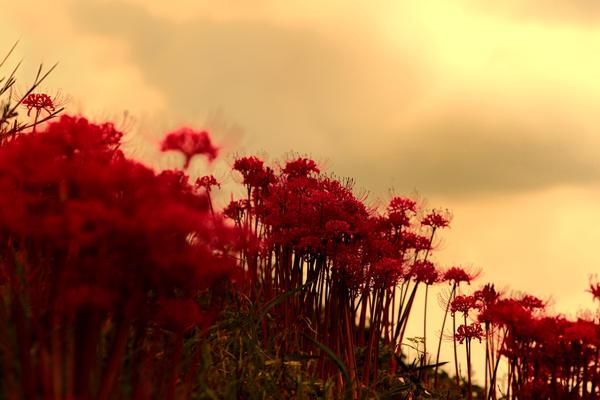 lilly sky by jyoujo