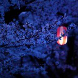 sakura - lonely souls by jyoujo