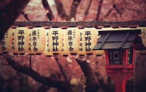 natural kindness of sakura by jyoujo