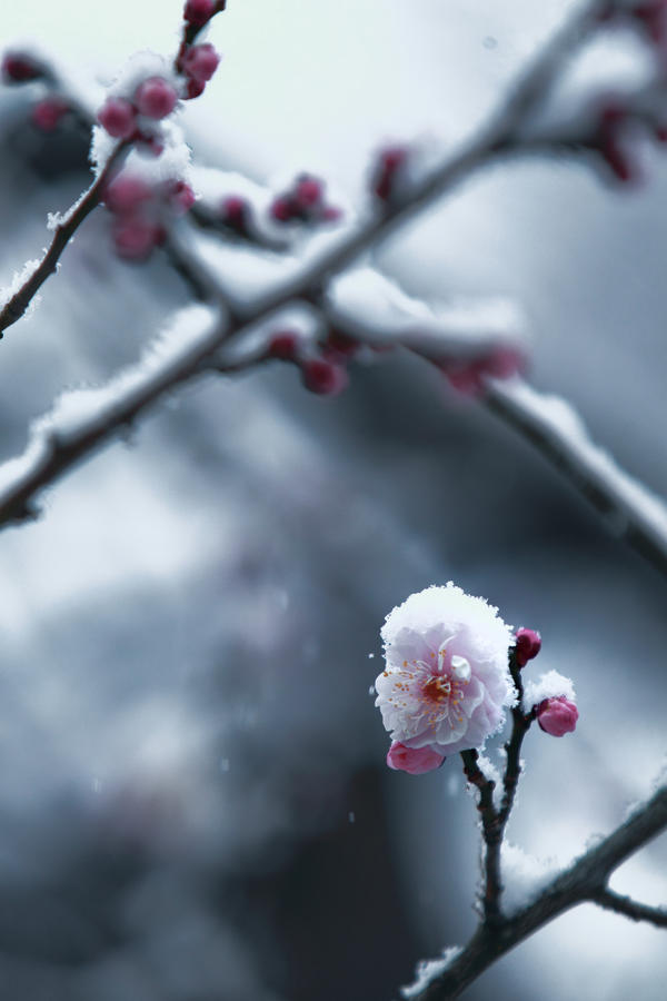 plum's struggling frozen life by jyoujo