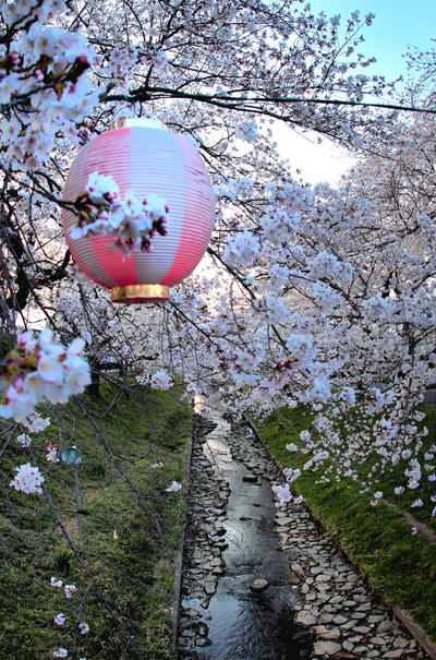 Dreams about sakura фотоработы jyoujo