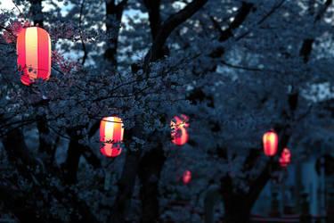 sakura's sleepwalking souls by jyoujo