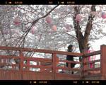kyoto streets scenes
