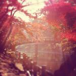 seasons silhouettes