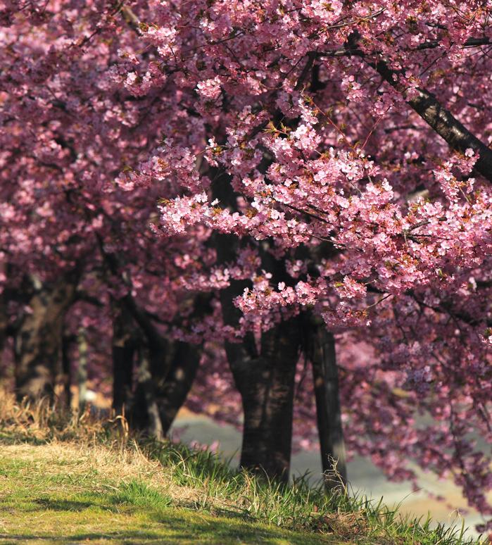 plum's paradise by jyoujo