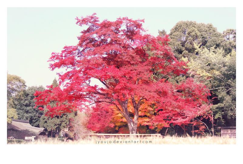 autumn (fall) back (again) by jyoujo