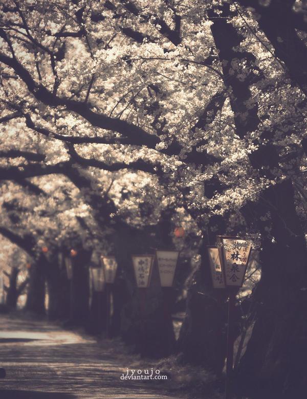 fragments - the sakura street by jyoujo