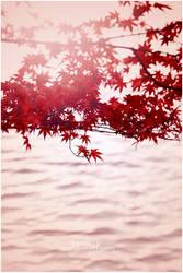 maple waters by jyoujo