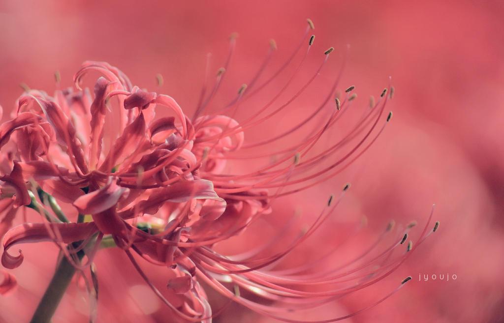Lotus Sutra by jyoujo on DeviantArt