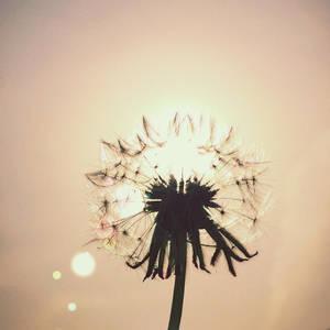 respire - in so many petals by jyoujo
