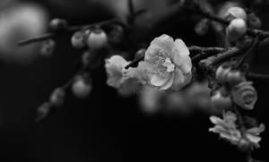 emptiness by jyoujo