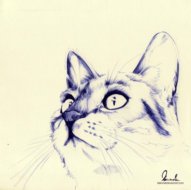 Ballpoint Pen Kitty - WIP by kleinmeli