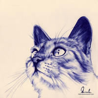 Ballpoint Pen Kitty