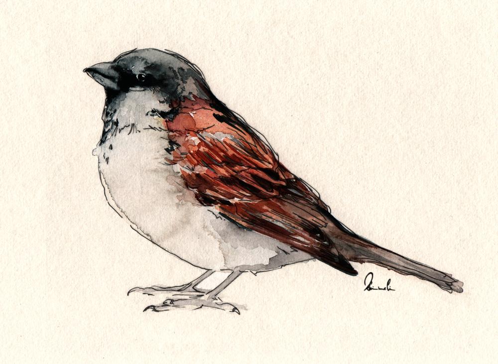 Little Bird by kleinmeli
