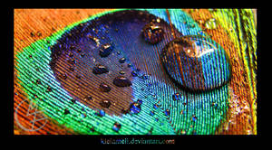 Macro Peacock II by kleinmeli