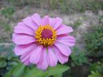 flower 37