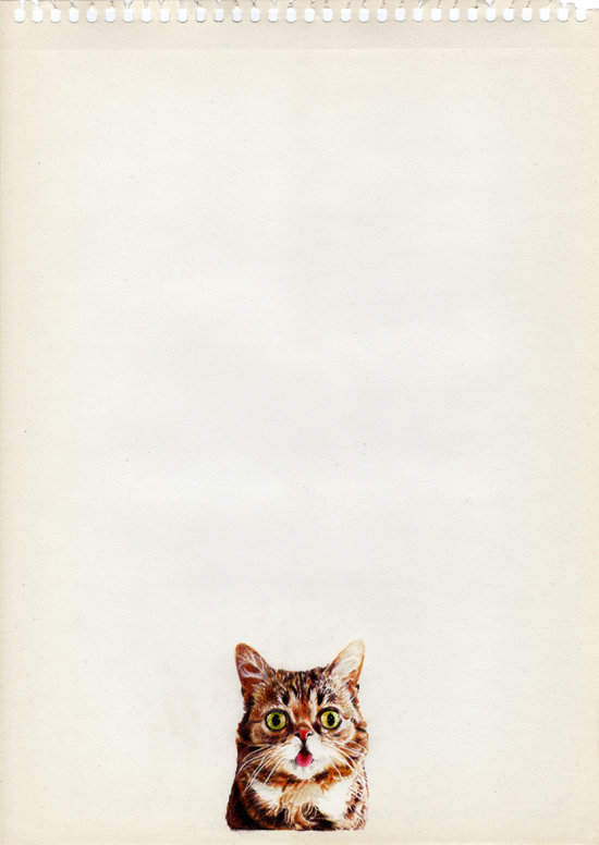 Lil BUB by Crimefish