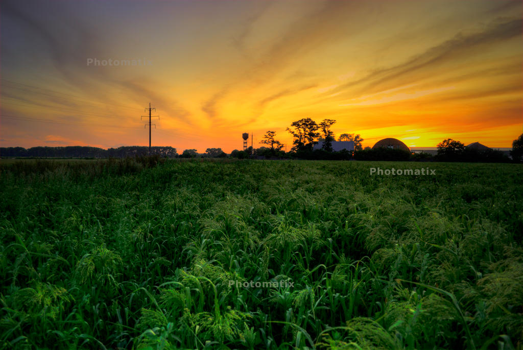 millet_field_HDR by Theressa