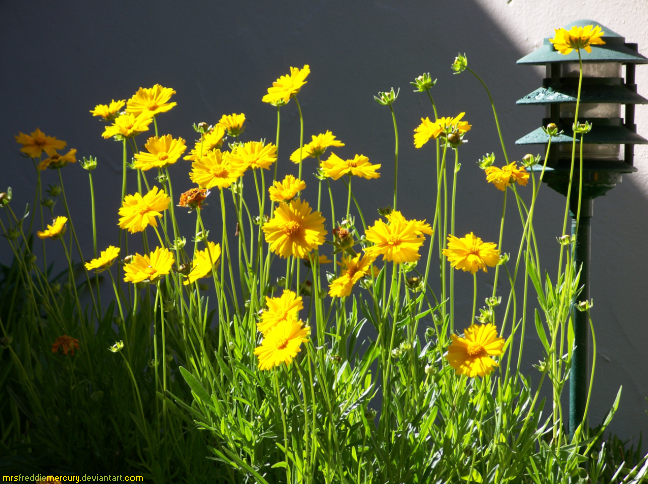 L S D 2 Cellophane Flowers By Mrsfreddiemercury On Deviantart