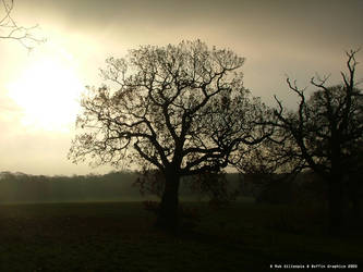 Winter Sun by Roboffin