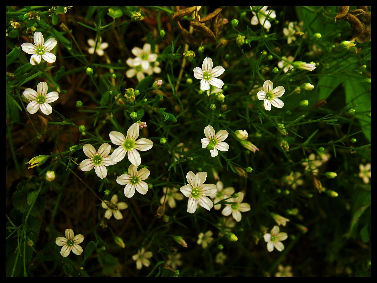 little flowers by anna2506 on deviantART