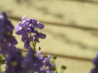 Purple Flowers. by AdamPerkowski