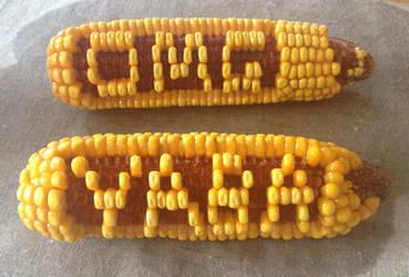 Corn Tweet by Crop-O