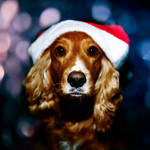Santa Puppy by WildRainOfIceAndFire
