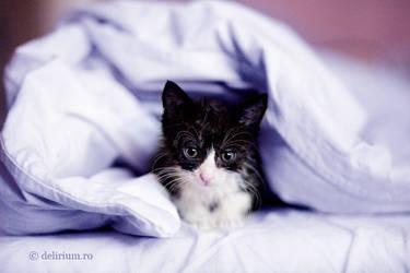 Kitten feeling blue by WildRainOfIceAndFire