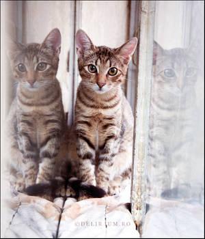 Third Dimension Kitty