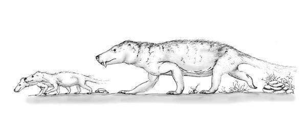 Glanosuchus by mojcaj