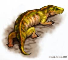 Cynariognathus platyrhinus by mojcaj