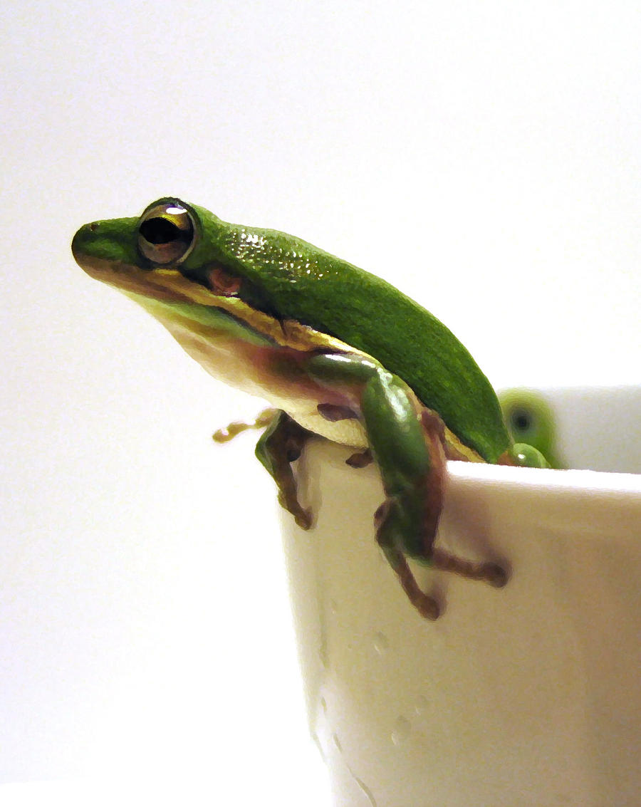 Green tree frog in a cup