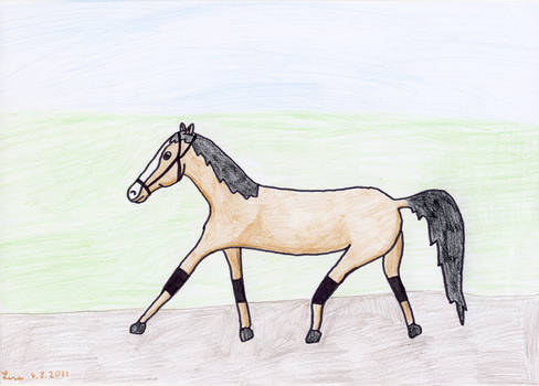 Horse trotting, Lisa, 9 years