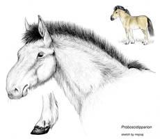 Proboscidipparion (Hipparion) ancient horse
