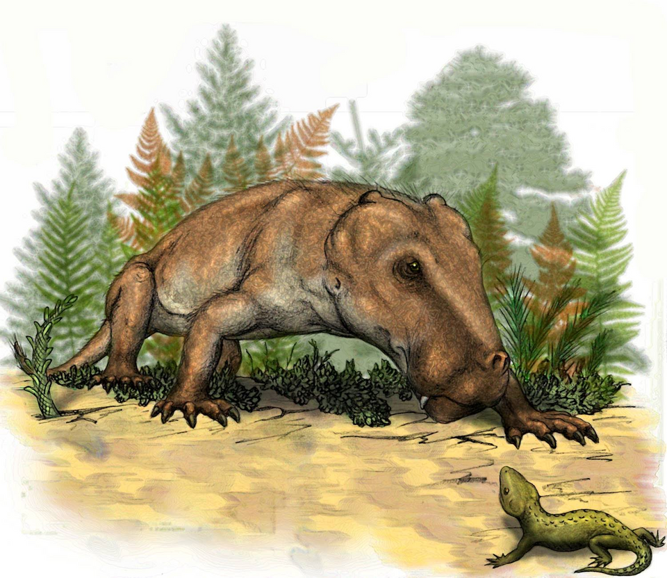 Pachydectes, speculative reconstruction by mojcaj