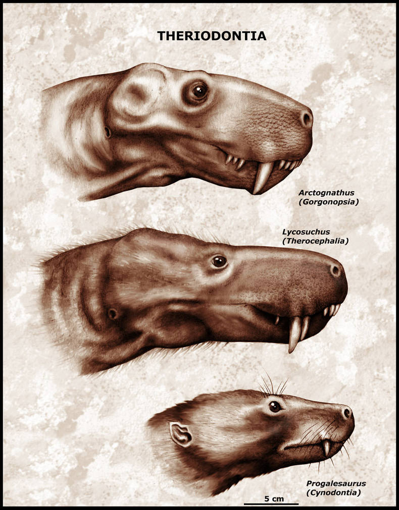 Portraits of different theriodonts