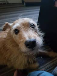 doggy by observerthe