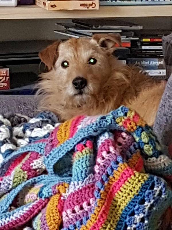 dog by observerthe