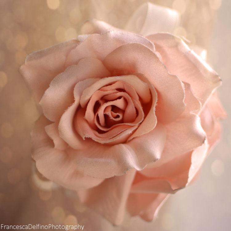 Rose and bokeh by FrancescaDelfino