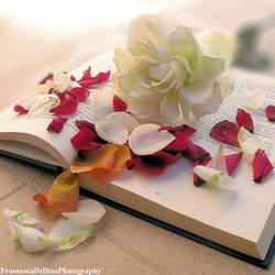 White rose and petals by FrancescaDelfino