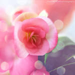 Pink flower by FrancescaDelfino