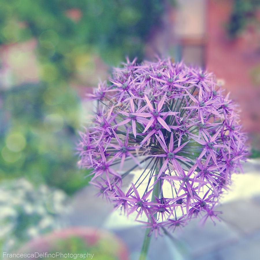Violetti kukka by FrancescaDelfino